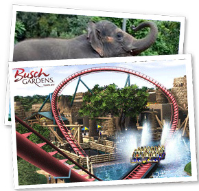 Busch garden orlando What time does busch gardens close today
