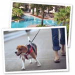 Pets at Tuscana Resort